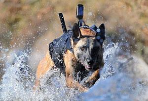 DogsOfWarEquipmentMain
