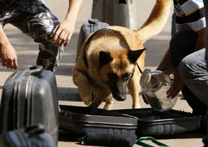 Post image for Dogs of War: Tactical Uses of Scent Detection