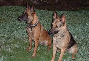 DogsOfDefenseProtectionDogMain