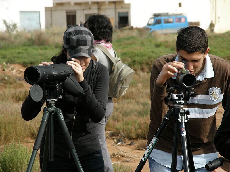 Observation-Nador